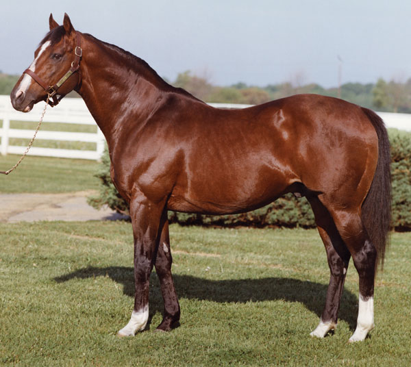 Northern Dancer 12